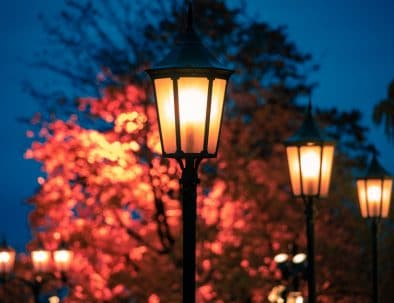 foliage and lamp lights